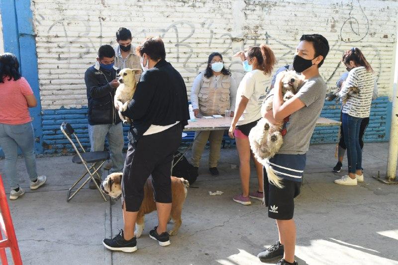 """la """"Tercera Feria de la Salud Animal Canina y Felina"""""""