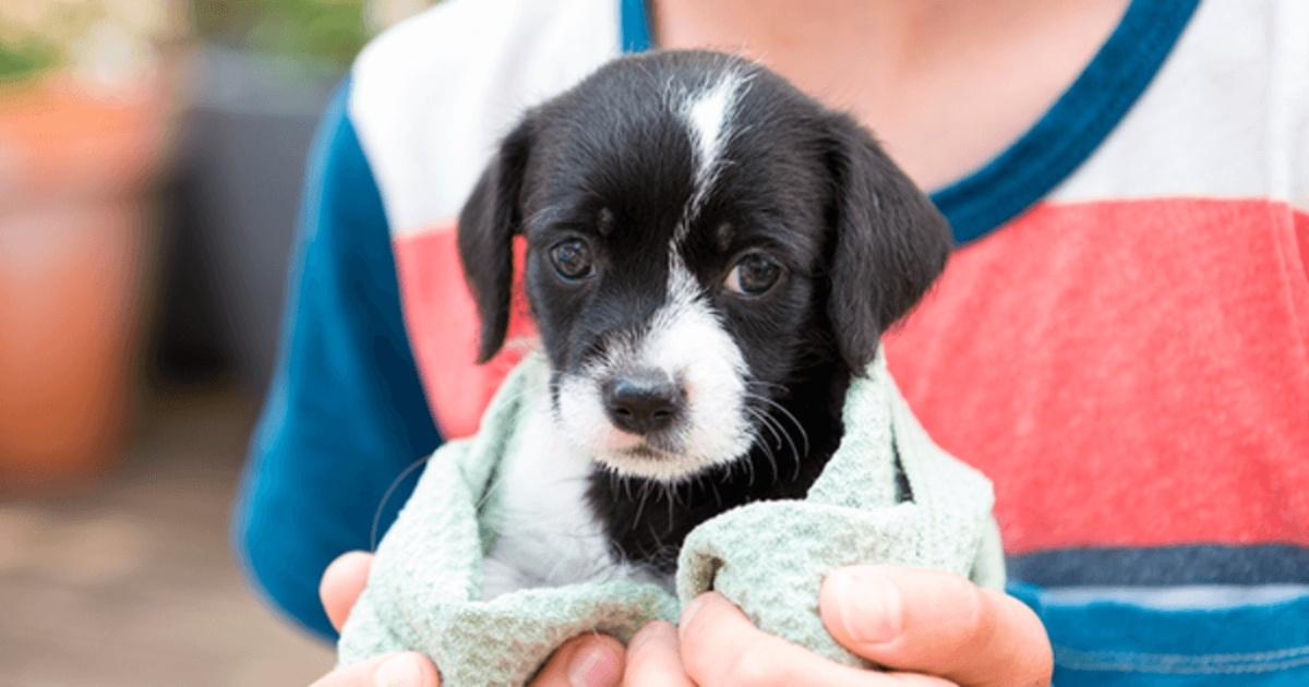 Mañana sábado 03 de julio se realizará la primera feria de adopción canina y felina en Jojutla