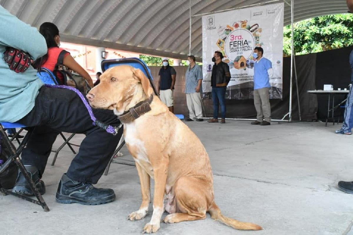 En Cuautla llevan a cabo la 3era Feria de la Salud Animal Canina y Felina 2021